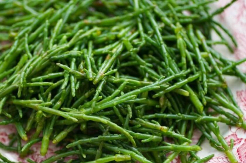 Zeekraal 80 gram