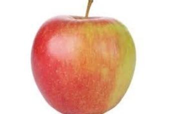 Jonagold appels grof 80/90 per kilo