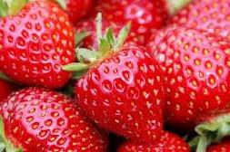 Aardbeien Super mooi Holland 500 gram