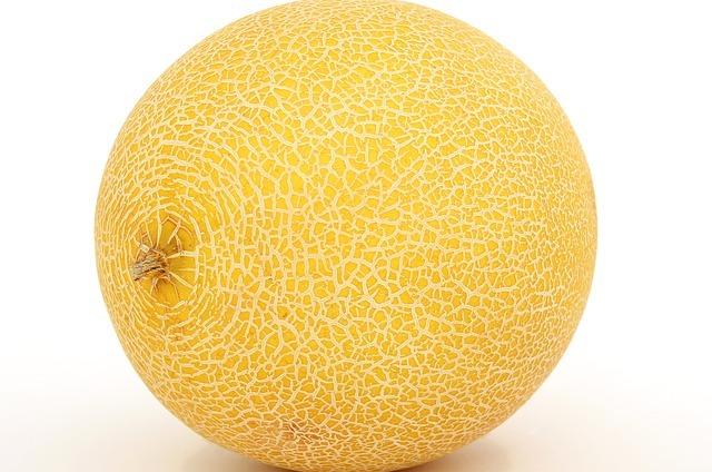 Galia meloen  groot en mooi  maat 5