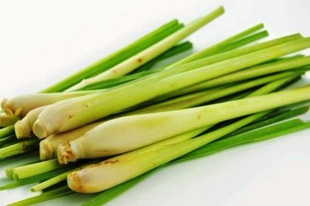 Sereh - citroen gras per  kilo