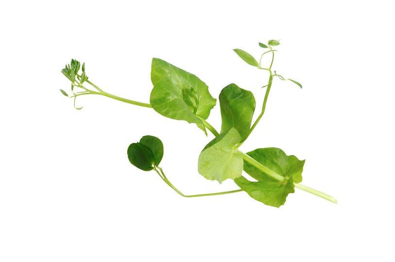 Salad Pea Cress 2 doosjes a .100 gram