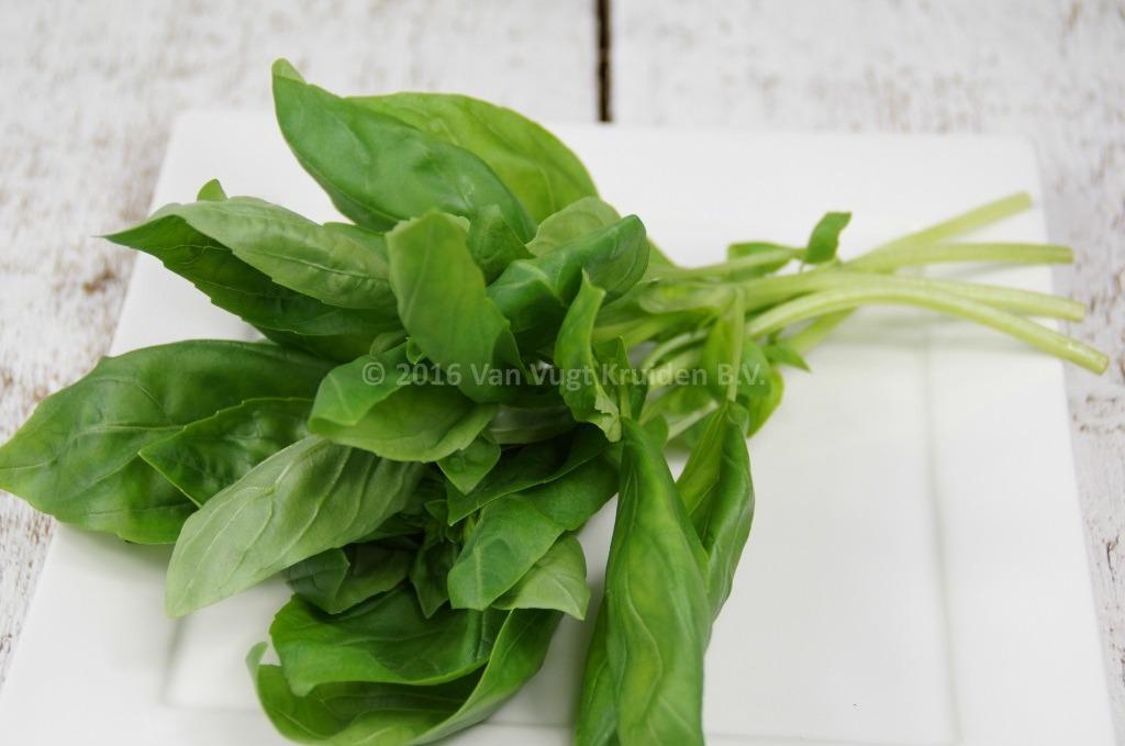 Basilicum groen per bos 75 gram
