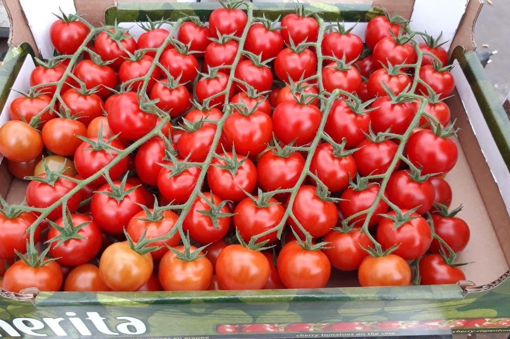 Tros cherry tomaatjes merk Prominent  doosje a. 3 kilo