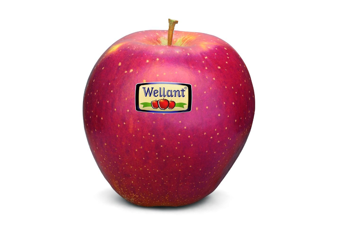 Wellant appel lokaal productper kist a. 11 kilo