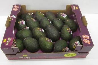 Avocado ready to eat per doos 18 - 20 stuks
